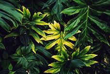 Canva - Beautiful Tropical Leaves.jpg