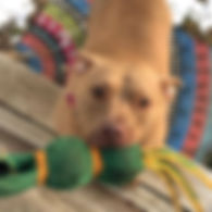 Savannah 😍 #fetchallday #petsitter #pet