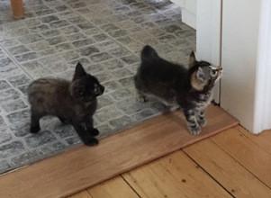 Våra nya katter