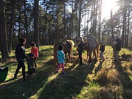 Ponnyridning på snälla islandshästar