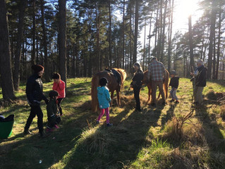 Ponnyridning i Öjersjö