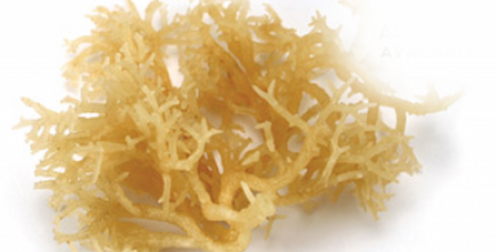 SEA MOSS COLLAGEN - MARKUS BODY FORCE