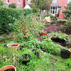 Saying Goodbye To The Allotment
