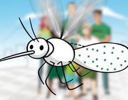 Aedes Aegypti - Fiocruz
