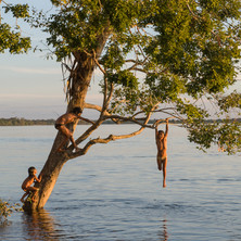 Kaiabi children playing in the trees by the Xingu River