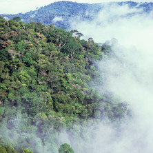Morning mist rises over the forests of the Kayapó hills