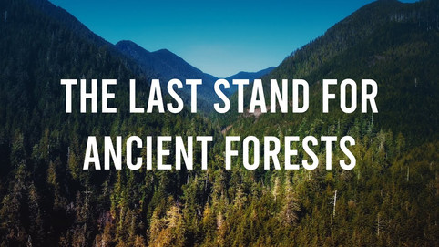 last stand for ancient forests