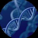 遺伝子02.png