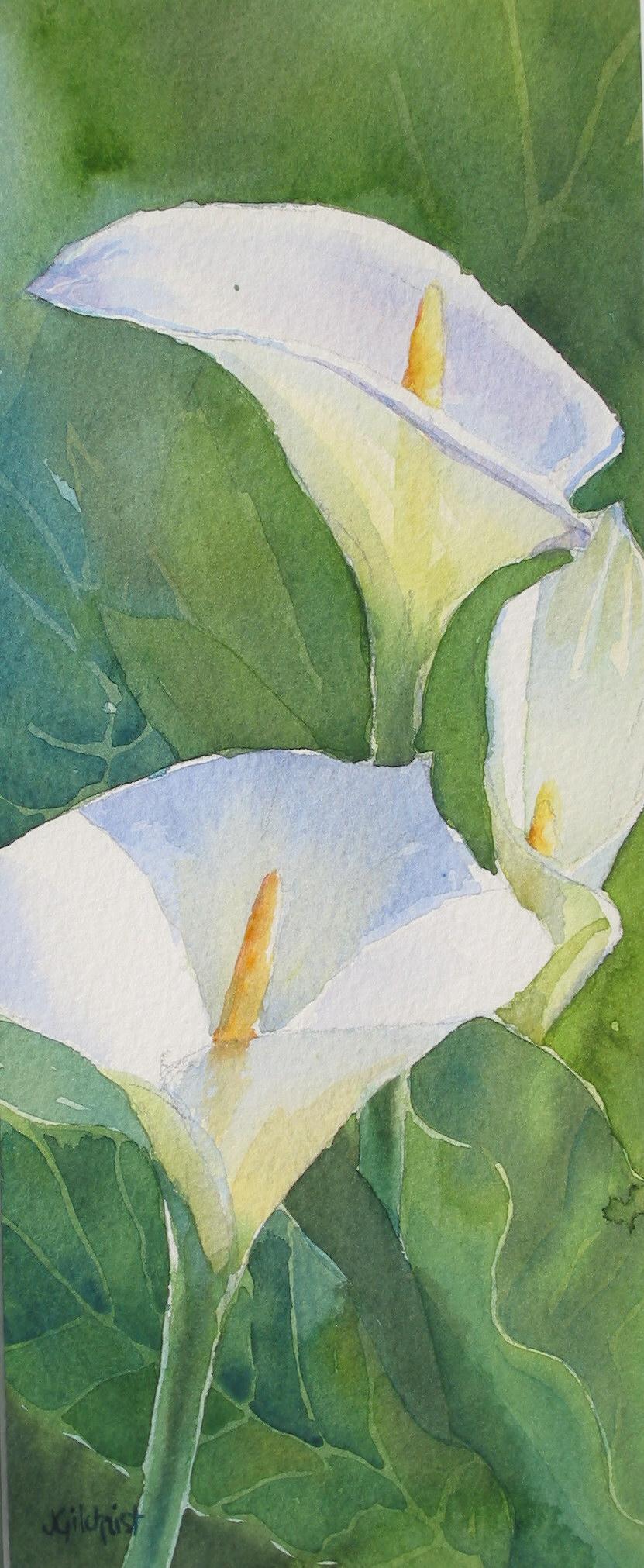 Arum Lillies