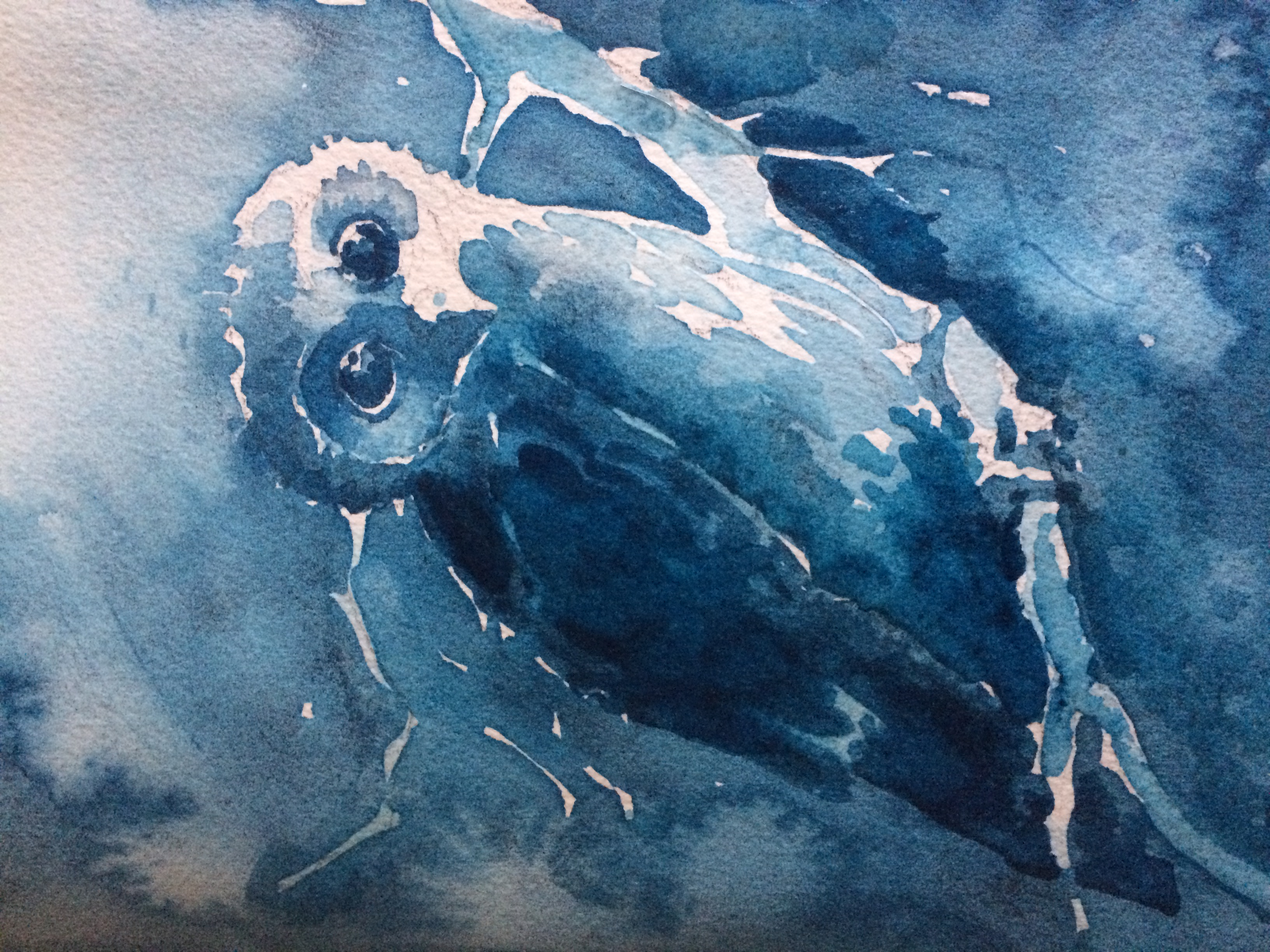 Blue Owl in Antwerp Blue