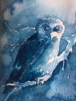 Blue Owl in Antwerp Blue
