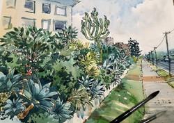 Pittwater Road Collaroy Garden
