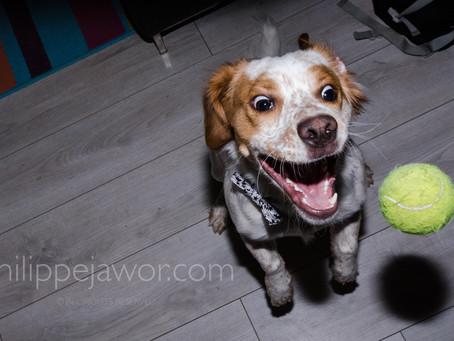 Un chien, une balle : des possibilités infinies !