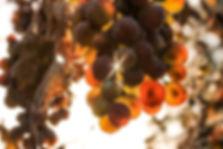 fruit-splitting-reduction.jpg