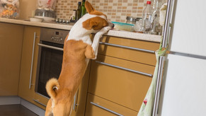 Tips For Pet-Proofing Your Home