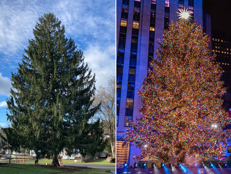 New York City: Rockefeller Christmas Tree Lighting 2020