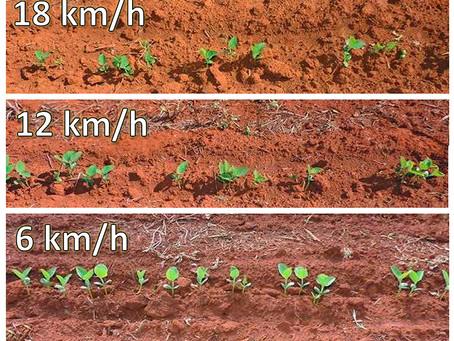 PLANTIO – Momento que se define o potencial genético da semente