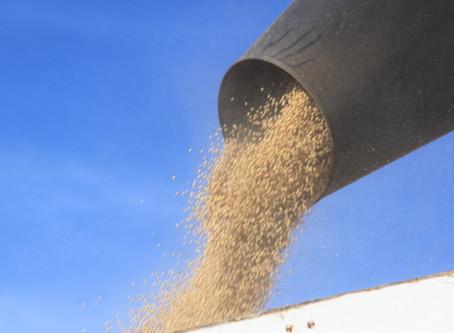 USDA: Embarques semanais de soja e grãos dos EUA ficam dentro das expectativas do mercado