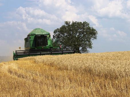 Paraná colhe maior safra de grãos da história