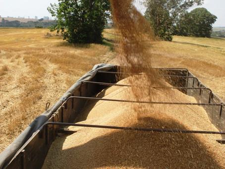 Mesmo durante crise, agricultura paranaense aumenta faturamento em R$ 10 bilhões