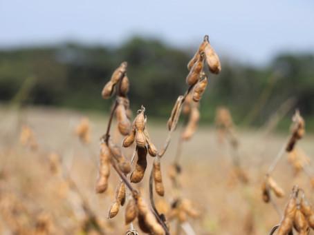 Entrada de novas pragas agrícolas no Brasil podem causar prejuízos no agronegócio