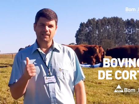 INFORME PECUÁRIO | Eduardo Lacerda comenta manejo de bovinos de corte