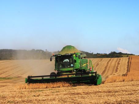 Com clima favorável, colheita da soja avança no Brasil e chega a 10% da área