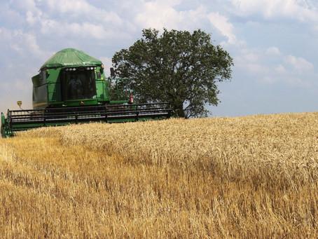 Deral vê safra de trigo consolidada no Paraná