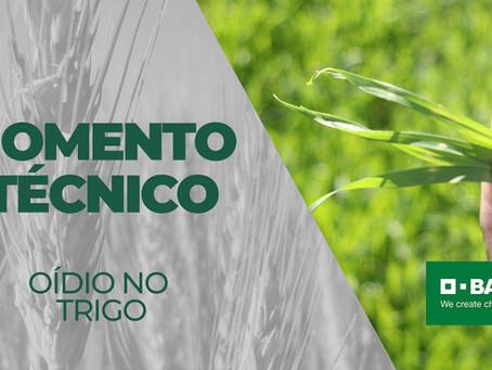 MOMENTO TÉCNICO - Manejo de oídio no trigo