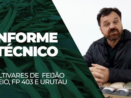 FEIJÃO - Carlos Klenki apresenta as cultivares Fibra IPR Urutau, BRS Esteio e BRS FP 403