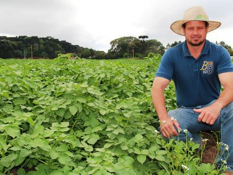 Produção de batata faz parte da história da família