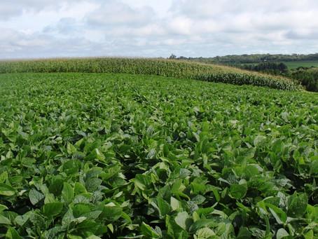 Lavouras de soja do Paraná têm a maior produtividade do Brasil