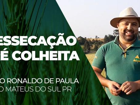 INFORME TÉCNICO - Dessecação Pré-Colheita de Trigo, com Celso Ronaldo