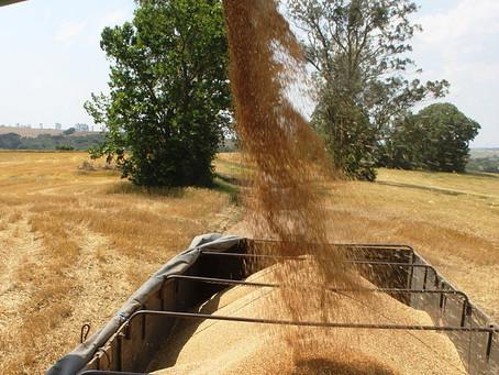 CONAB: Nova safra de grãos deve superar em até 15,6% à de 2015/2016 e atingir mais um recorde