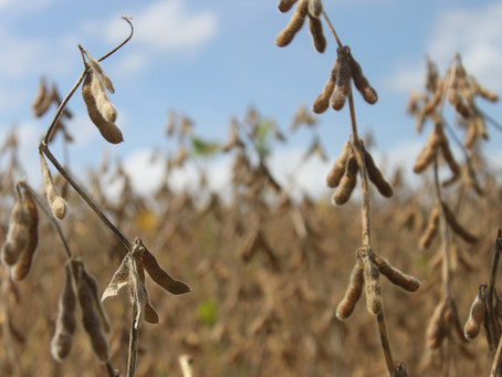 Deral eleva previsões para produção de soja e milho do Paraná
