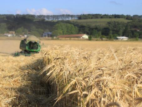 Estudo prevê aumento de 60% na produção agropecuária mundial nas próximas décadas