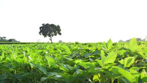 MAPA publica calendário de semeadura de soja para a safra 2021/2022