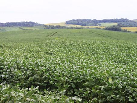 Soja e milho são âncoras da agricultura brasileira, diz estudo