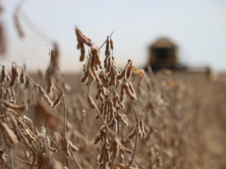 Ramo Agropecuário: O potencial do Agro