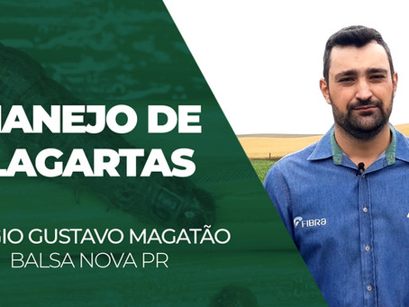 INFORME TÉCNICO - Manejo de Lagartas, com Sérgio Gustavo