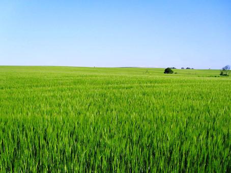 Previsão climática é favorável as culturas de inverno na safra 2016