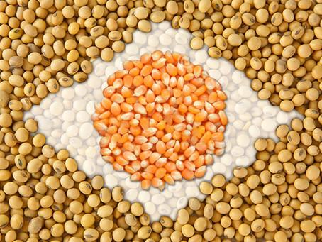 México quer comprar grãos do Brasil