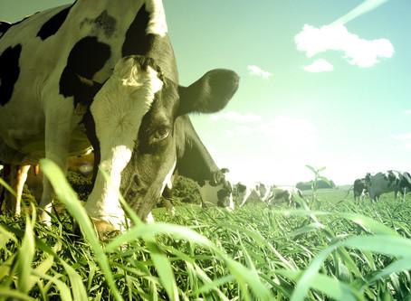 Produção de leite deve crescer no Brasil, mas recuperação será lenta