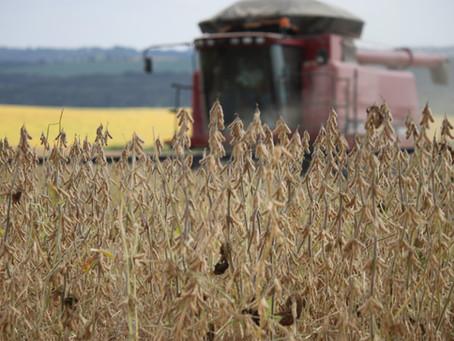 AGRO - PIB do agronegócio do Brasil cresceu 5,26% no primeiro semestre de 2020