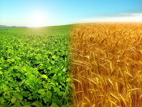 Agricultura dobra exportação em 6 anos