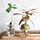 Thumbnail: Box set germinazione e propagazione semi