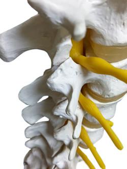 Spinalnerven