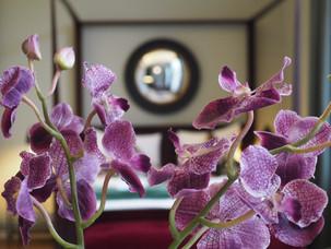 Klassisk hotell på Oslos beste vestkant