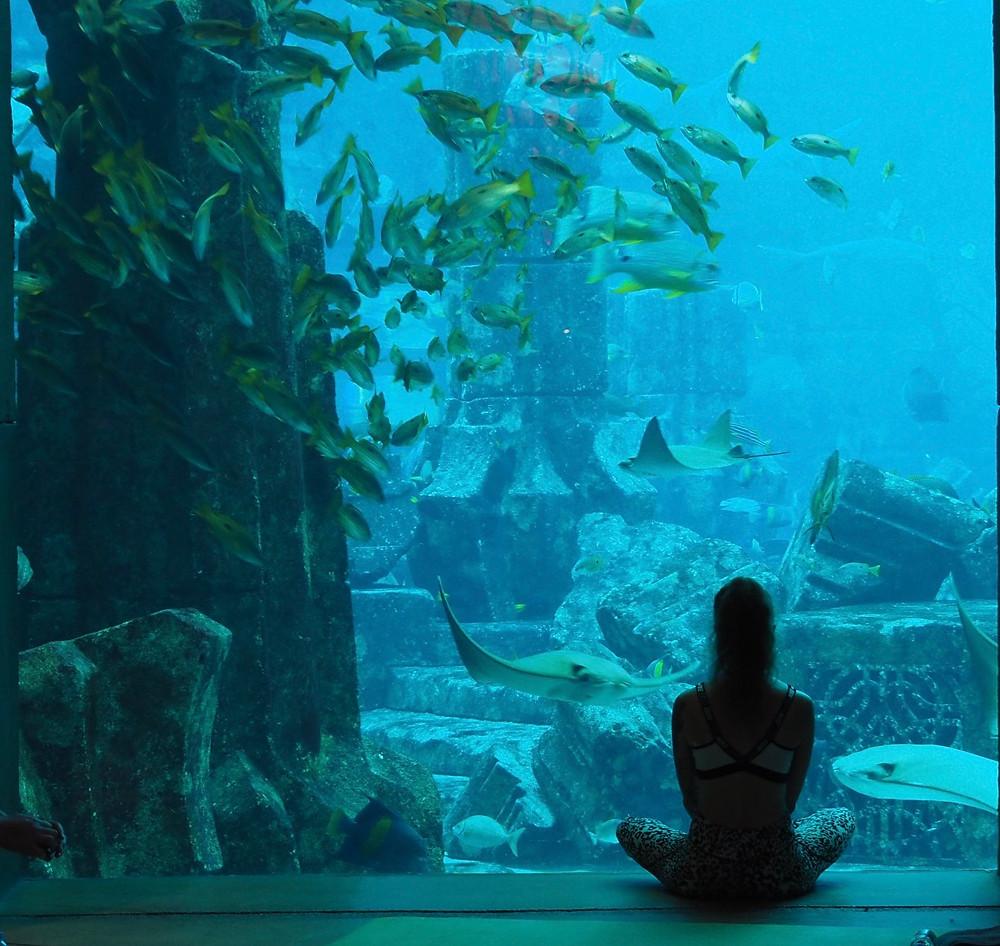 Yoga i akvariet