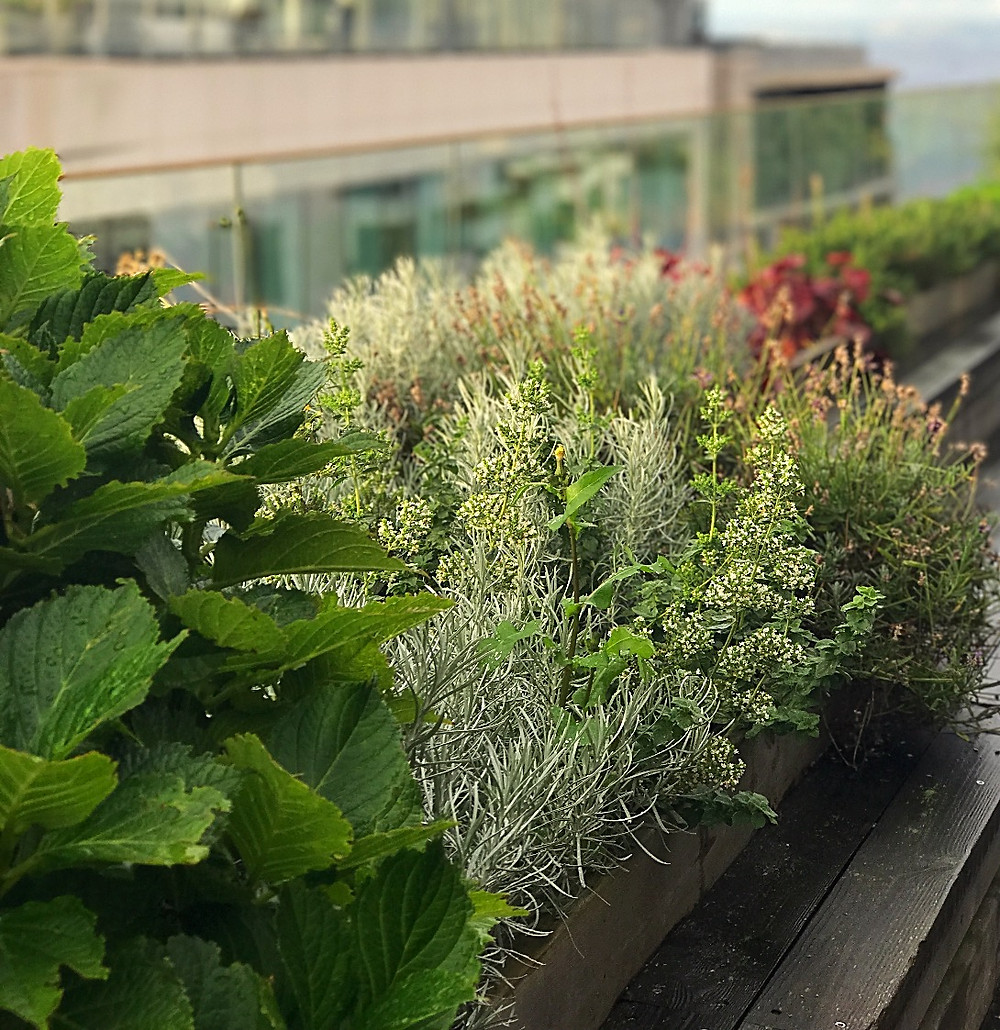Herbs from the balcony